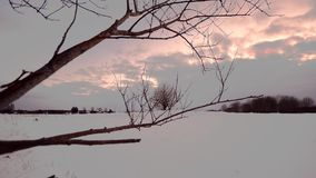 Winter forest, sunset. Dolly. Camera moving smooth. stock video