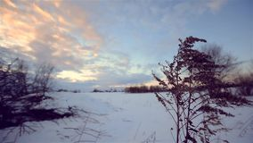 Winter forest, sunset. Dolly. Camera moving smooth. stock footage
