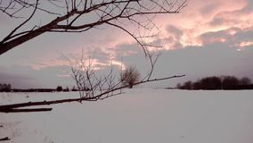 Winter forest, sunset. Dolly. Camera moving smooth. stock video footage