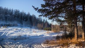 Winter forest sunset lights blue yellow Royalty Free Stock Image