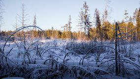Winter forest sunset lights blue yellow Royalty Free Stock Images