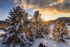 Winter forest at sunset Royalty Free Stock Photography