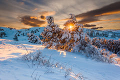 Winter forest at sunset Stock Images