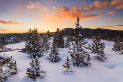 Winter forest at sunset Royalty Free Stock Images