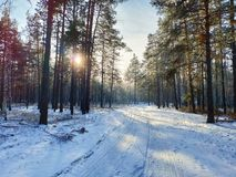 Winter forest at sunset stock photography