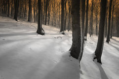 Winter in a forest at sunset with snow trough trees Stock Photo