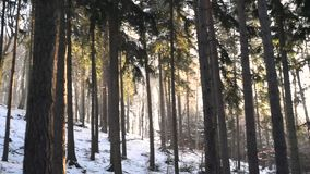 Winter forest sunset sun ray beams and falling snow, around 180. Winter forest sunset sun ray beams and falling snow, looking around 180 stock video