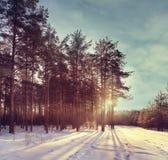 Winter forest sunset sunbeams Stock Photos
