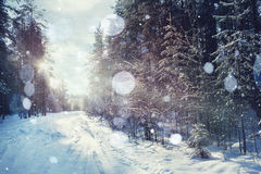 Winter forest in sunset sunbeams Stock Photos