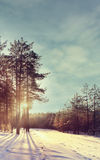 Winter forest sunset sunbeams Royalty Free Stock Photography