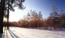 Winter forest sunset sunbeams Stock Photo