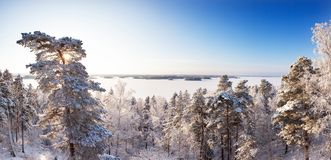 Winter forest in sunshine with a lake and blue sky in bakcground stock photo