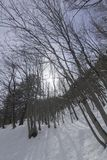 Winter forest in Switserland. On a sunny day Stock Images