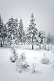 Winter forest in taiga.National park Taganay.Ural. Royalty Free Stock Photography