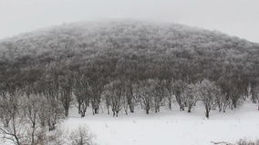 Winter forest timelapse stock video footage
