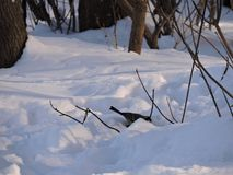 Winter forest and titmouse on the snow