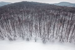 Winter forest Top view. Snowy winter forest aerial. Aerial View Royalty Free Stock Photography