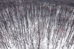 Winter forest Top view. Snowy winter forest aerial. Aerial View Stock Image