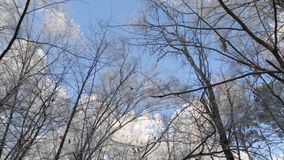 Winter forest, the tops of the trees stock video footage