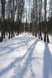 Winter forest and track Stock Photo