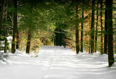 Winter forest trail. A path in the wooded forest leading from winter and snow to spring and green colorful trees Royalty Free Stock Photo