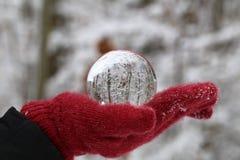 Winter forest through a transparent glass ball.  stock photo