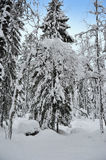 Winter forest tree Stock Photo