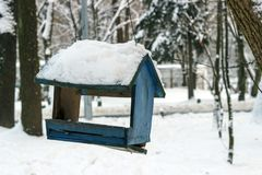In the winter forest on the tree hangs a bird feeder. royalty free stock photos