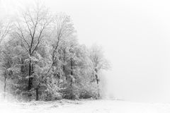 Winter Forest Tree silhouettes Stock Photography
