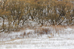 Winter forest, tree, snow, landscape, countryside Stock Photos