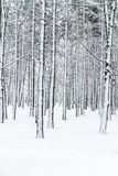 Winter forest with tree trunks and branches covered by snow Stock Photos