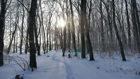 Winter forest tree trunks in the snow nature landscape sunlight sun glare. Winter forest tree trunks in snow nature landscape sunlight sun glare stock video