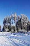 Winter forest trees Royalty Free Stock Images