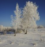 Winter forest trees on a clearing in the frost on a blue sky bac Stock Images