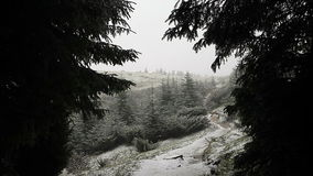 Winter forest with trees covered snow stock footage