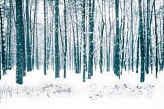 Winter forest with trees covered snow. Stock Photos
