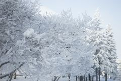 Winter forest with trees covered snow. White frost park landscape. Winter forest with trees covered snow. White frost park landscape Stock Photos