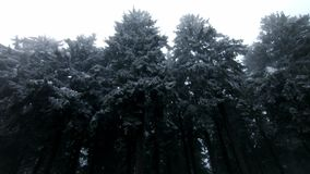 WInter in the forest. Trees covered in snow. White winter movie. In 4k stock footage