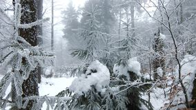 WInter in the forest. Trees covered in snow. White winter movie. In 4k stock video footage