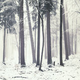 Winter forest trees Royalty Free Stock Photos