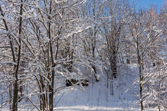 Winter forest. Trees and a hill in the snow. Winter. Russia royalty free stock photography