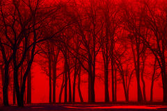 Winter forest trees in red fog Royalty Free Stock Image