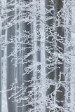 Winter in forest, trees with rime. Cold winter with ice on tree blanch in Europe, Germany. Winter wood, white forest landscape. Rime winter royalty free stock photo