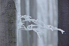 Winter in forest, trees with rime. Cold winter with ice on tree blanch in Europe, Germany. Winter wood, white forest landscape. Sm. Winter in forest, trees with royalty free stock image