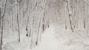 Footpath through birch tree forest. Winter forest, trees in the snow