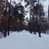 Winter forest. Trees snow nature Royalty Free Stock Images