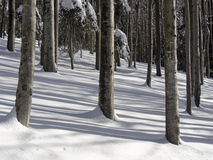 Winter forest with trees Stock Image
