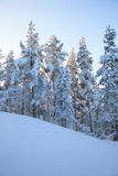 Winter forest at twilight Stock Photography