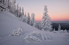 Winter forest at twilights. Winter forest at twilight after sunset Royalty Free Stock Photo