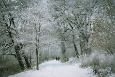 Winter forest. Two man woman in the winter park Royalty Free Stock Photography